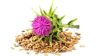 Marianum Silybum seed oil organic vegan